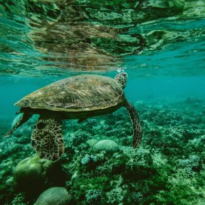 Campanha tartarugas